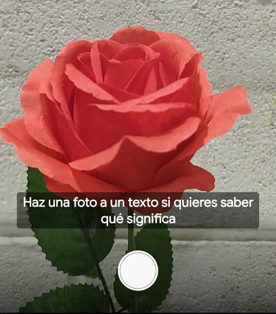 Google Lens Rosa