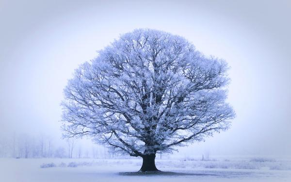 46 HD and QHD wallpapers of gorgeous trees (Round 2)