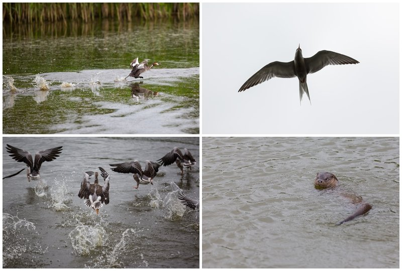 BROADS PHOTOGRAPHY CRUISES - NORFOLK AND NORWICH COMMERCIAL PHOTOGRAPHER 4