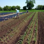 Organic farmers and beekeepers are natural partners