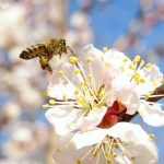 Introduction to Beekeeping – (3) The Importance of Bees