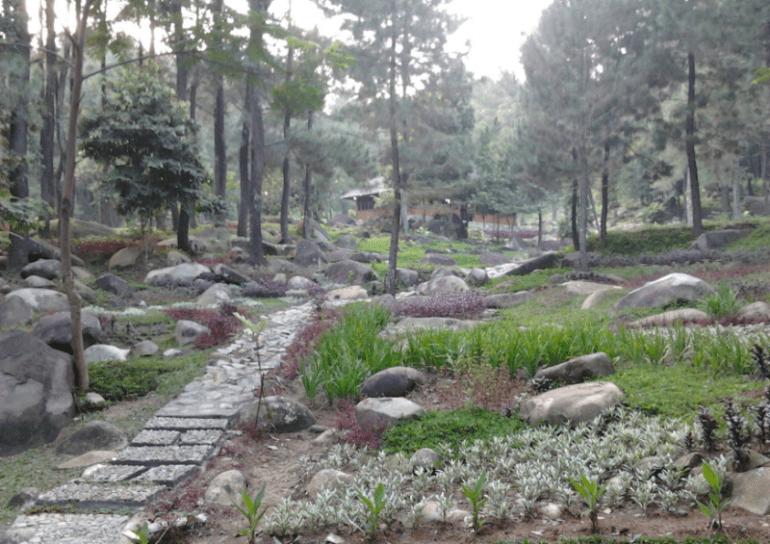 Wisata hutan Gunung Pancar