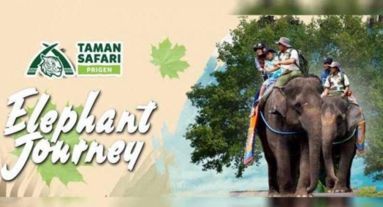 Atraksi gajah di Taman Safari Prigen