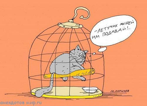 Анекдоты в картинках про котов | Мир анекдотов