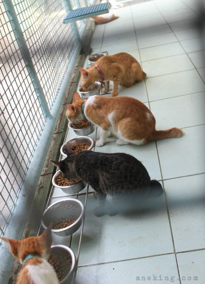 paws feeding cats