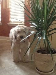 Finn hiding by the plant