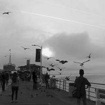 Gulls and jets take to the skies above Santa Monica Pier