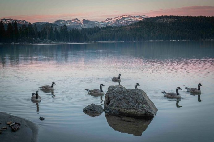 Ice House Reservior Canada Geese by Trey Steinhart