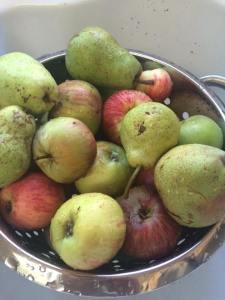 gleaning_harvest