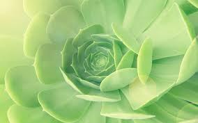 imagessucculent