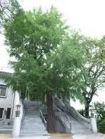 Hosen-Ji