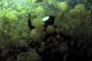 Buzo y medusas
