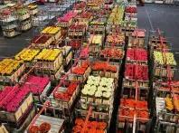 Mercado de Keukenhof.