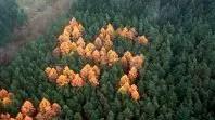 Esvástica del bosque