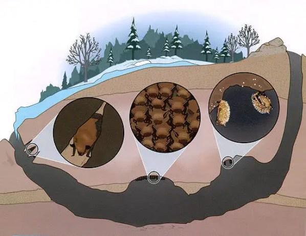 Esquema de la caverna Bracken.
