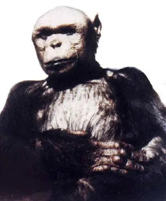 Fotografía del chimpancé Oliver.