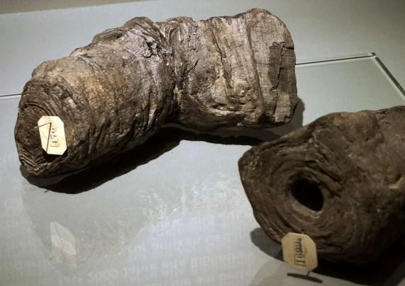 Fotografía de dos papiros.