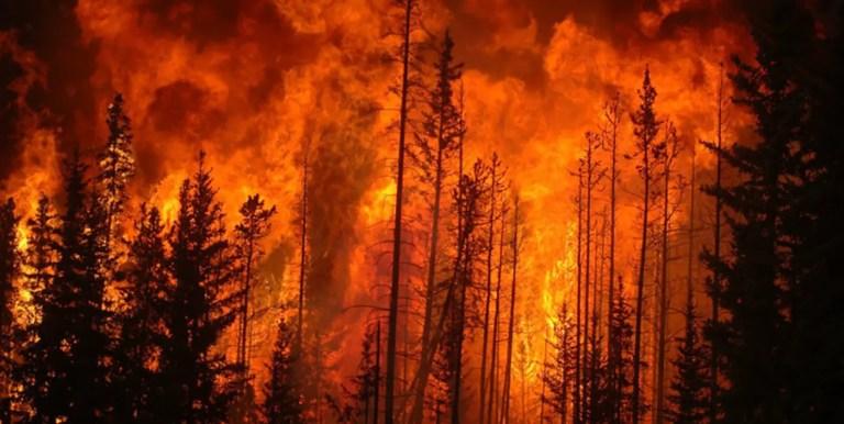 Escapando de un incendio forestal voraz en automóvil