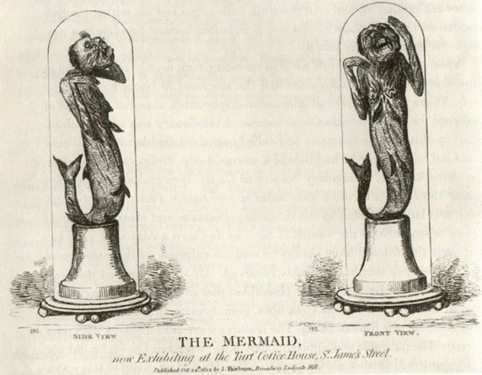 Ilustración de la La sirena de Fiji.