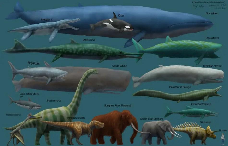 Esquema con los animales más grandes del mundo.