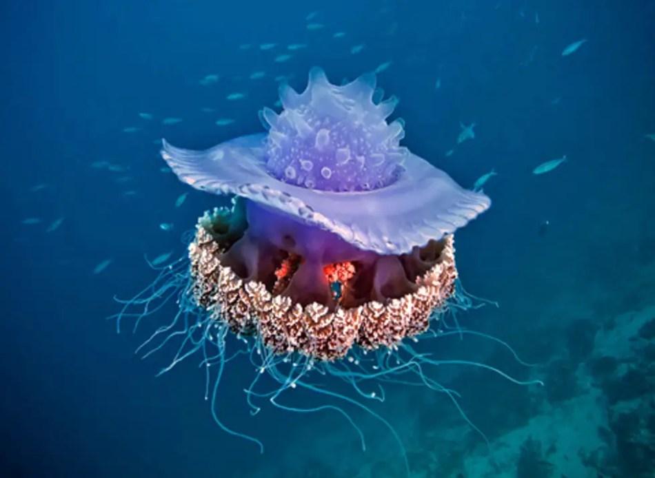 Fotografía de una coronada.