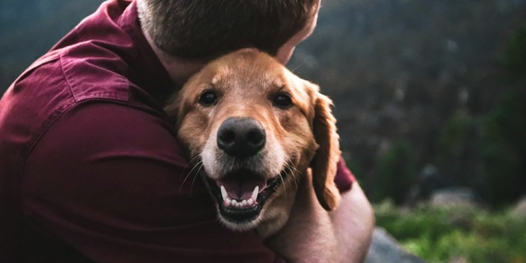 Hachiko el perro más fiel de la historia que esperó a su dueño por años