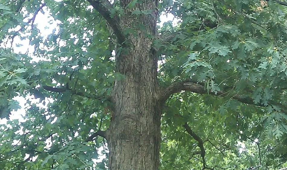 Detalle del árbol dueño de si mismo.