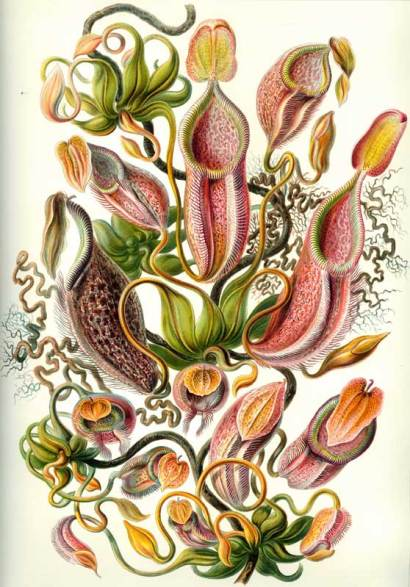 Ilustraciones del Kunstformen der Natur.