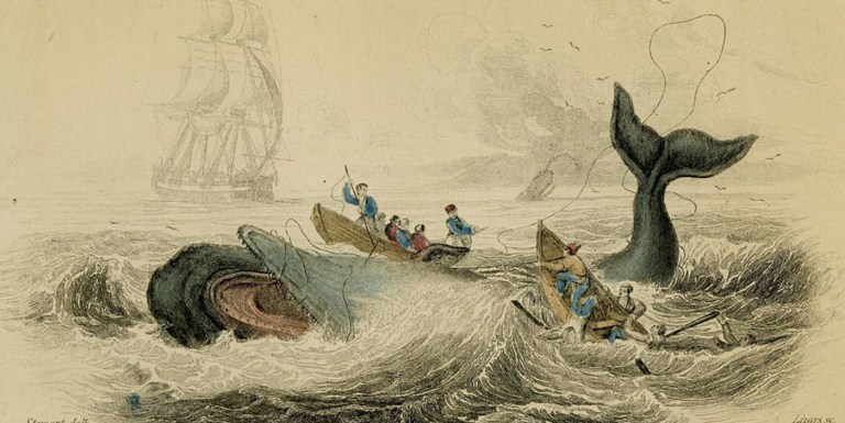 Mocha Dick, el cachalote que  inspiró a Moby Dick de Herman Melville