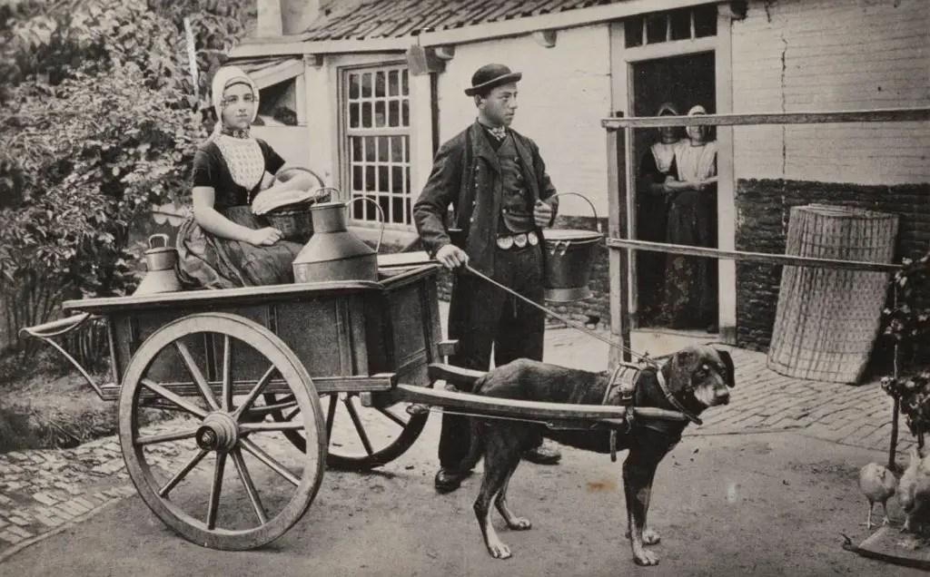 Fotografía de un perro impulsando un carro.