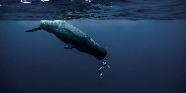 El viaje al fondo del mar sin tanques de oxigeno de Guillaume Nery