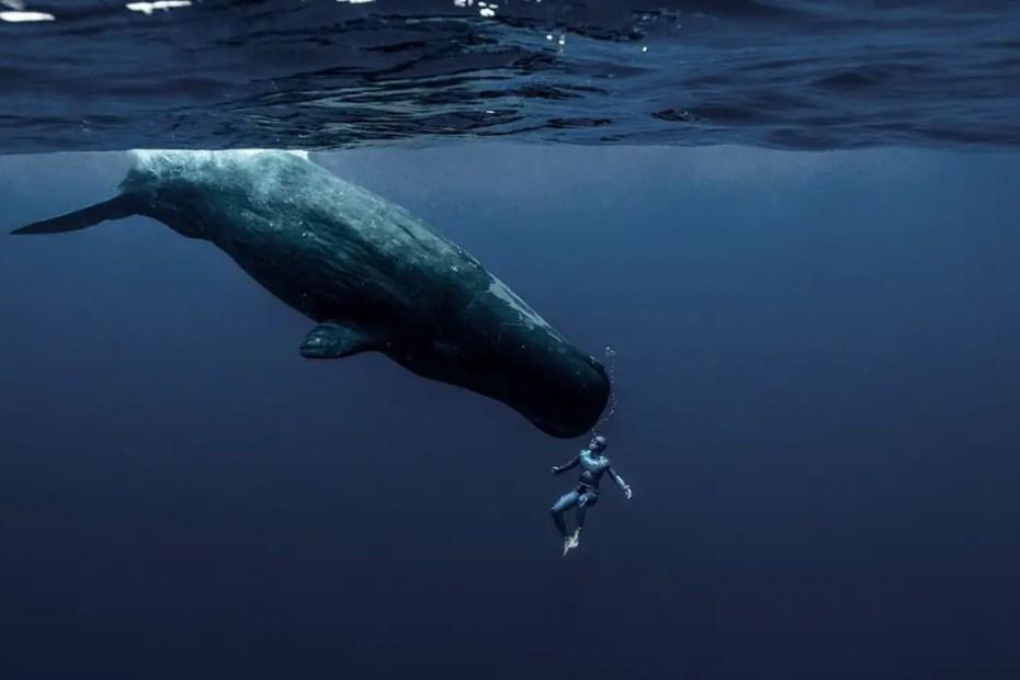 Fotografía de Guillaume Nery y una ballena.