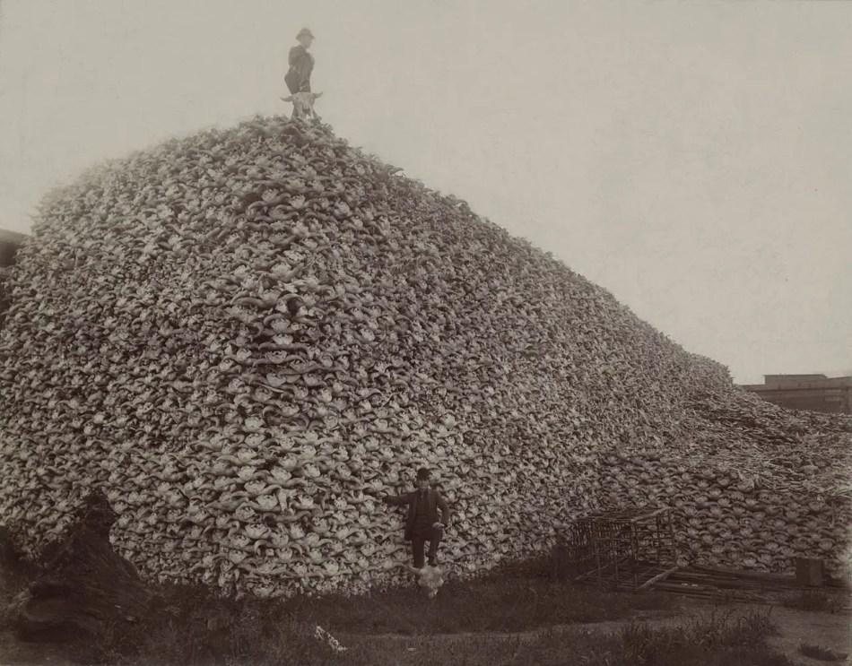 Un hombre parado en una montaña de cráneos de bisonte.