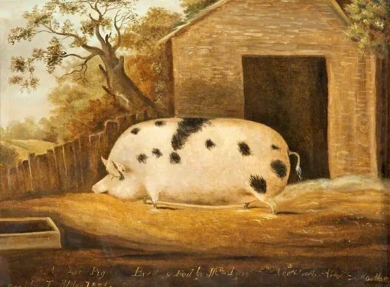 Pintura de un cerdo gigante.