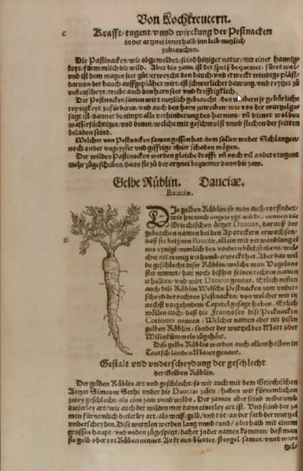 Ilustración de una Zanahoria amarilla en un códice antiguo.