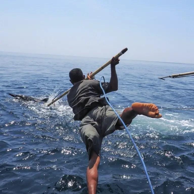 Hombre saltando de un bote sosteniendo un arpón.