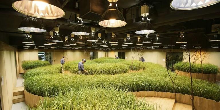 Fotografía de las granjas subterráneas de Japón.