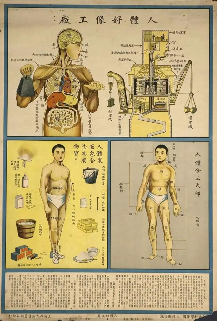 Ilustración sobre anatomía e higiene escolar japonesa del siglo XX.