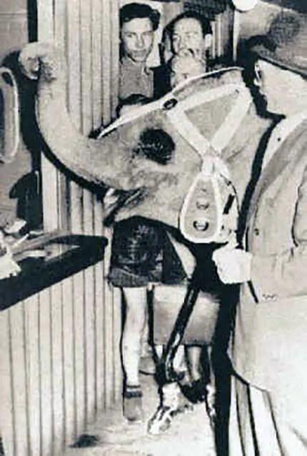 Tuffi la elefanta en la boletería del tren aéreo.