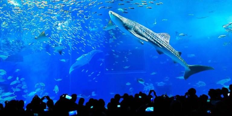 Kuroshio Sea, el acuario marino más impresionante del mundo