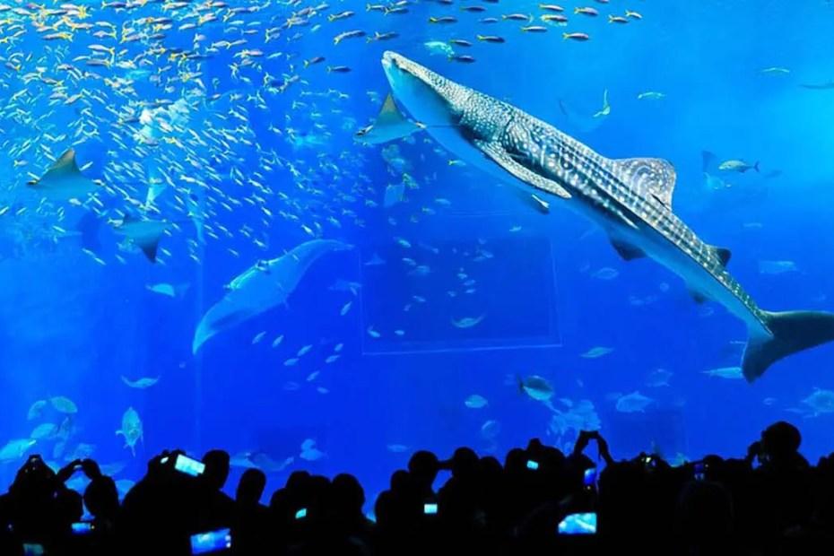 Varios peces en el Kuroshio Sea.