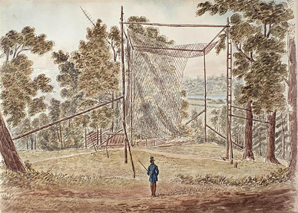 Redes para cazar palomas pasajeras.