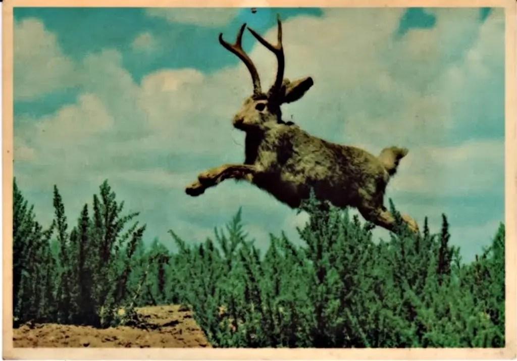 Collage a manera de broma realizado en el siglo XX y en el cual vemos a un conejo cornudo.