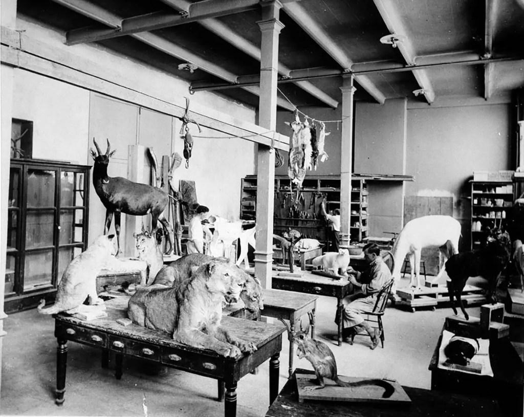 Sala de taxidermia de Theodore Roosevelt.