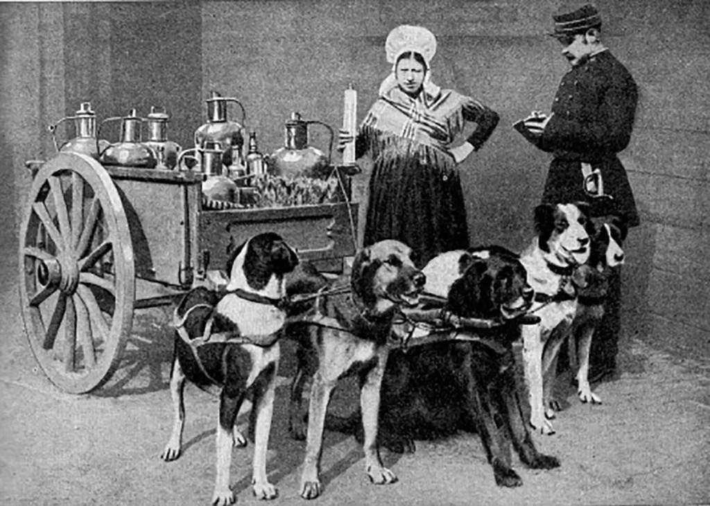 Perros lecheros del siglo XIX.