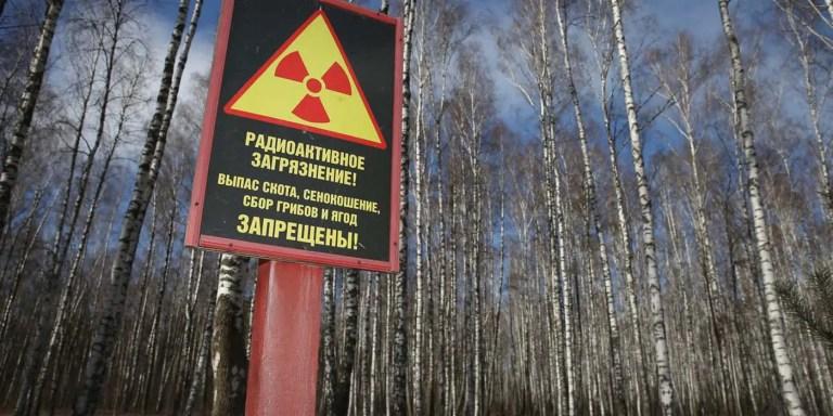 El bosque rojo de Chernobyl, el bosque peor contaminado del mundo