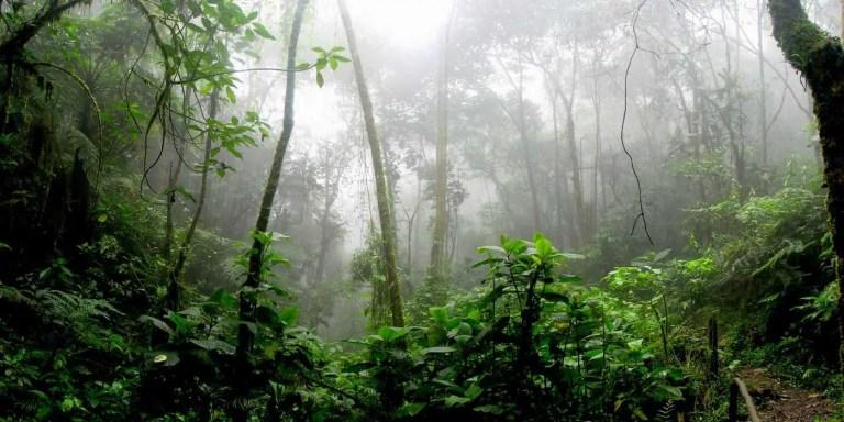 El experimento que destruyó el ecosistema de Borneo, especies invasivas