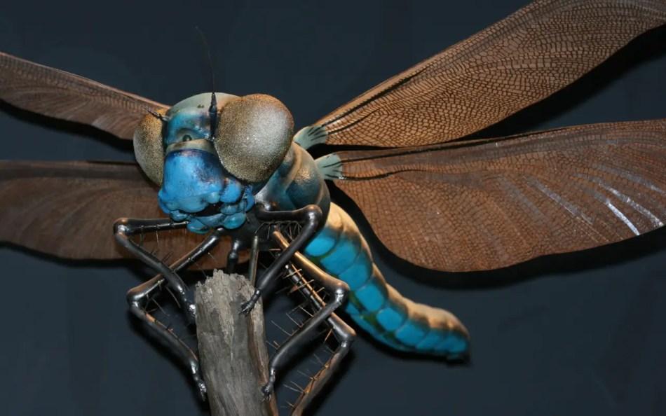 Reconstrucción de una Meganeura, el insecto más grande de la tierra..