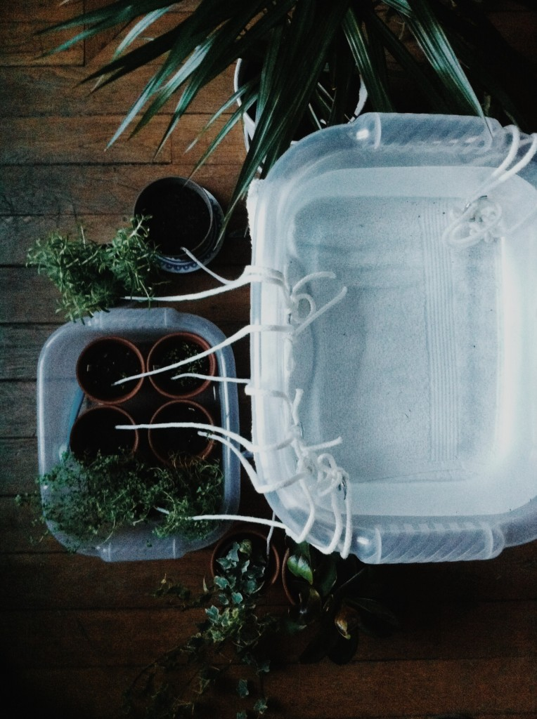 Self-watering system for the plants