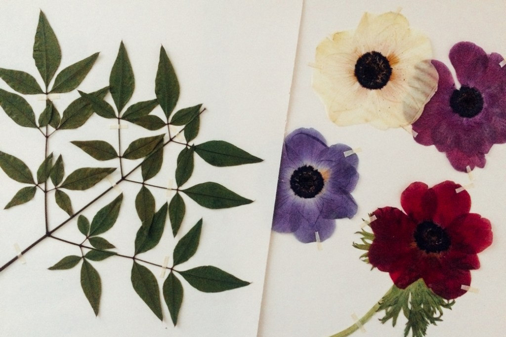 PRESSED FLOWERS / HERBIER - angdoo.com/blog